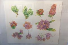 """Rododendronstudie""  (Berti Emma)"